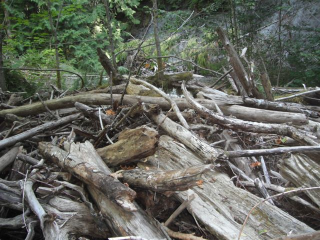 Centre Creek Log Jam