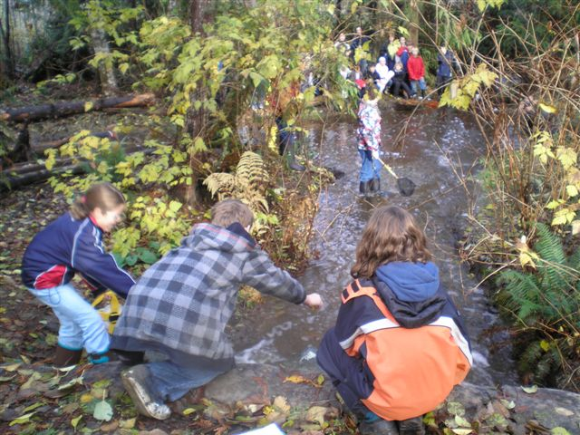 Grade 6 Class at Springwood measuring stream flow